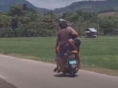 Чудаки прокатились на мотоцикле в тесноте, да не в обиде