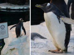 Самка пингвина, живущая в зоопарке, признана самой старой в мире