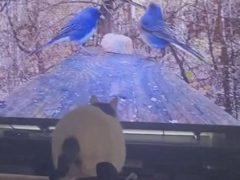 Возомнив себя великой охотницей, кошка ударилась об телевизор