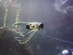 Робот-кальмар умеет плавать под водой и снимать морских обитателей