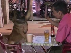Случайность не позволила псу красиво выполнить трюк