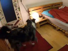 Собака не забывает перед сном выключить свет и накрыться одеялом