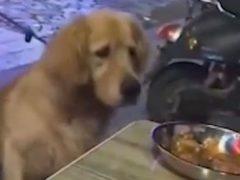 Хозяйке не стоило брать на прогулку голодную собаку