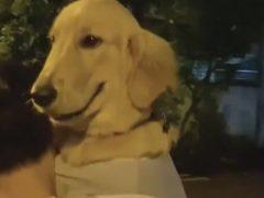 Собака, которую носят на ручках, не перестаёт улыбаться