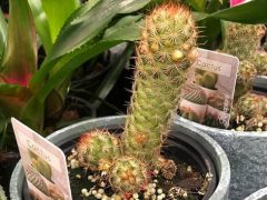 Покупательницу позабавил неприличный кактус