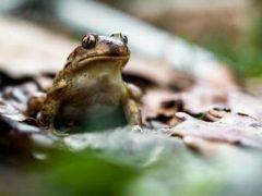 Таинственный незнакомец присылает мужчине фотографии жаб и лягушек