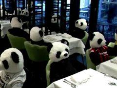 Игрушечные панды помогли ресторатору устроить тихий протест