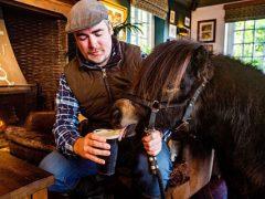 Пони регулярно захаживает в паб, чтобы выпить пива и закусить морковкой