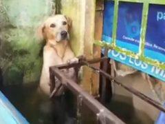 Пса, пострадавшего от наводнения, не бросили в беде