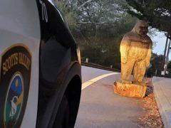 Подозрительная фигура на обочине дороги оказалась краденым бигфутом