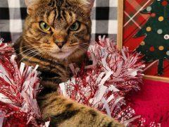 Кот со злобным лицом сделал неплохую рекламу приюту для животных
