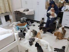 Любительница животных поселила у себя несколько сотен кошек