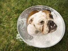 Советы тем, кто не знает, как мыть собаку