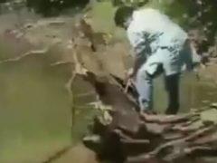 Попытка поймать кобру чуть было не закончилась для змееловов бедой