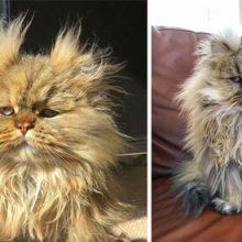 Кот стал звездой интернета за вечно невыспавшийся вид
