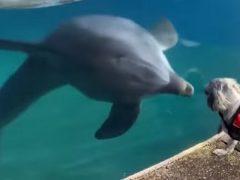 Знакомство с дельфинами поразило собаку