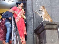 Бездомная собака ежедневно приходит к храму, чтобы приветствовать верующих