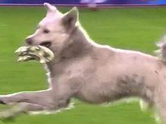 Собака не только прервала футбольный матч, но и нашла нового хозяина