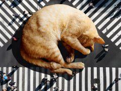 Фантазёр населяет мир гигантскими кошками