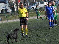 Футбольный судья показал непослушной собаке красную карточку