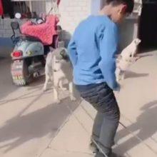 Собака помогает детям играть в резиночку