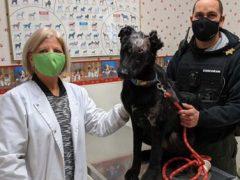Пёс, выживший после ожогов, готовится стать терапевтическим животным