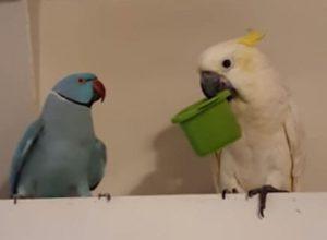 Попугай уверен, что за недружелюбие нужно наказывать