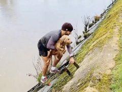 Пёс, свалившийся в реку, был спасён усилиями неравнодушного бегуна