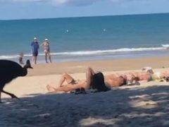 Крупная птица явилась на пляж и распугала отдыхающих