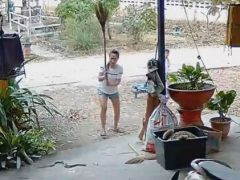 Кобру, приползшую к дому, избили метлой