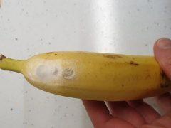 Покупательница испугалась, когда поняла, что в бананах могут завестись пауки