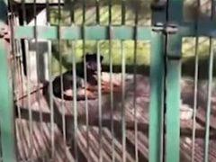 Зоопарк показал посетителям собаку вместо волка