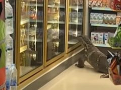 Варан явился на шопинг и устроил беспорядок в магазине