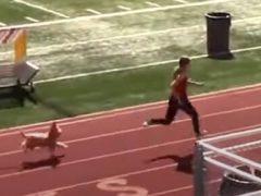 Собака присоединилась к соревнованию по бегу и выиграла