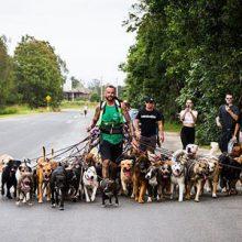 Отправившись на прогулку с 55 собаками, мужчина попытался побить мировой рекорд