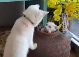 Глиняный горшок стал отличным реквизитом для кошачьей игры