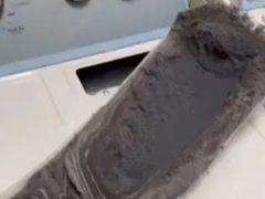 Хозяйку порицают за ужасное состояние сушильной машины