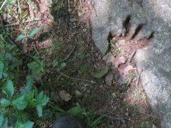 Археологи разочаровали туриста, который нашёл отпечаток лапы динозавра
