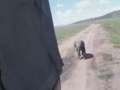 Потерявшийся слонёнок воссоединился с родственниками