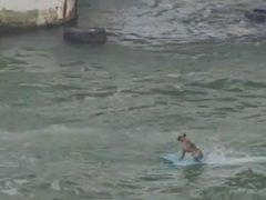 Очевидцев изумила собака, катающаяся на водной доске
