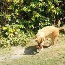 Игрушка стала для собаки причиной неожиданных трудностей