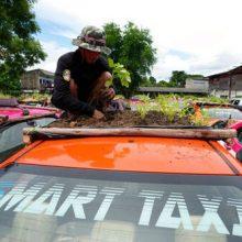 Таксисты превратили крыши автомобилей в огороды