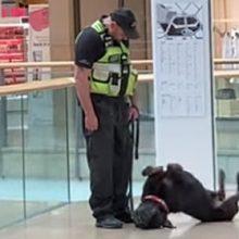 Выяснилось, что служебные собаки тоже не прочь подурачиться