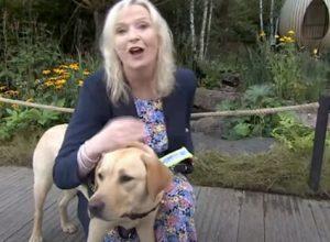 Собака-поводырь уронила журналистку в прямом эфире