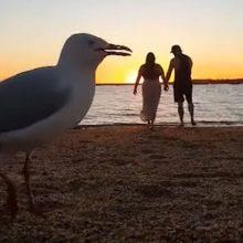 Видео, которое должно было стать романтическим, получилось смешным из-за чаек