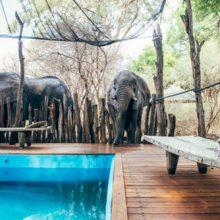 Слон, испытывавший жажду, напился из бассейна